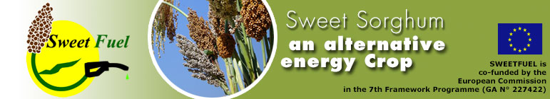 © sweetfuel - sweet sorghum, an alternative energy crop